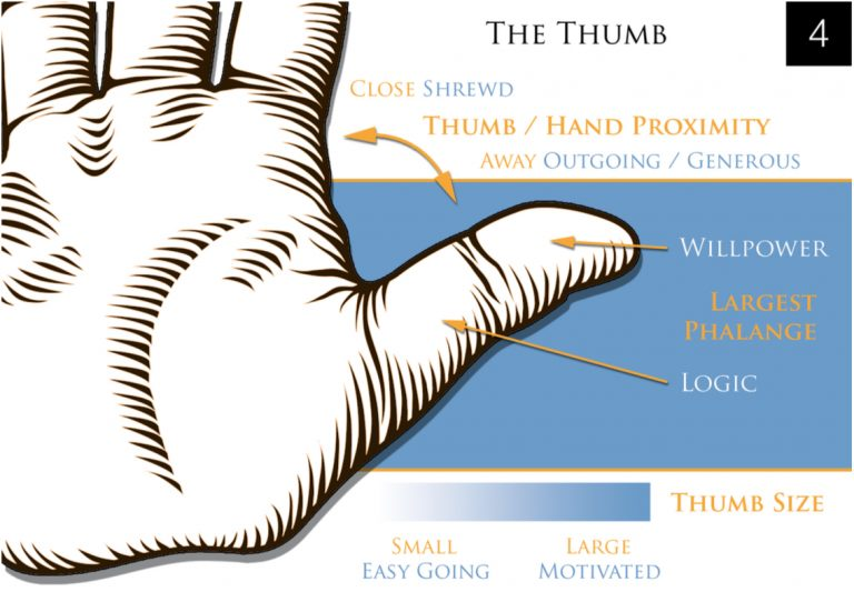 Palmistry The Thumb